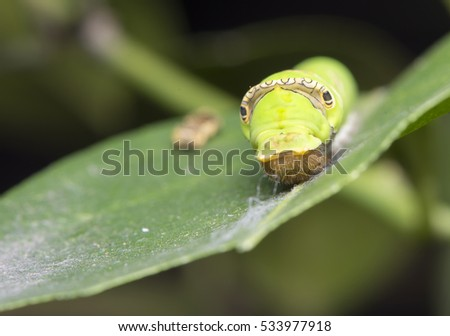 Worm on the leaves