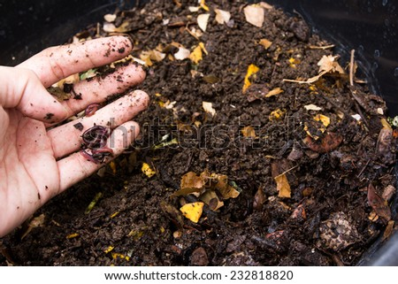 worm ; red worm manure on the hand  - stock photo