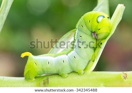 Worm the caterpillars eating leaves and stems of plants. - stock photo