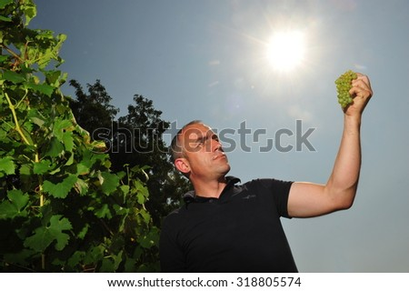 Worms, Germany - Jule 3, 2009 - Winemaker holding grape against sun checking quality of recent harvest
