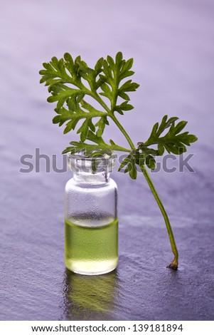 wormwood herb essence natural medicine - stock photo