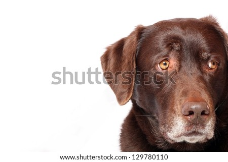 Worried Dog - stock photo