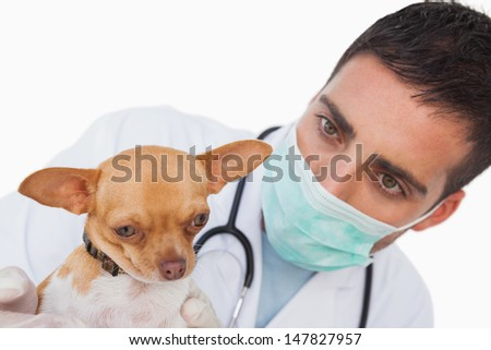 Worried male vet holding a cute chihuahua on white background