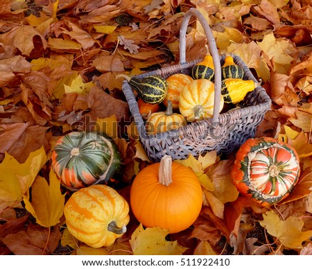 Woven basket full of ornamental pumpkins with colourful gourds on a brown and yellow autumnal foliage