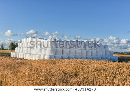 Wrapped Round White Hay Bales Field. Rural Area. Wheat Field in Foreground.
