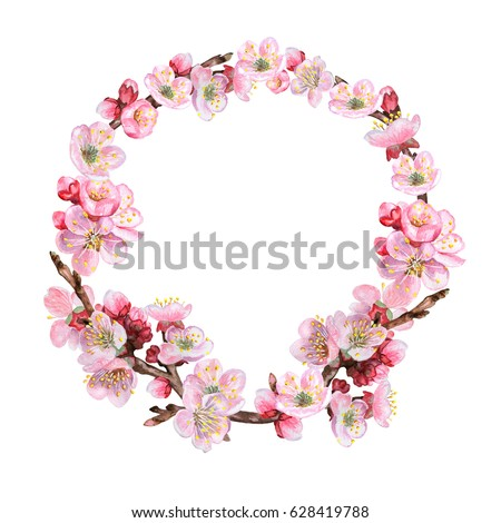 Wreath from blossoming apple-tree isolated on white background. Flowering cherry branches, apricots. Sakura. Illustration. Watercolor. Handmade. Picture