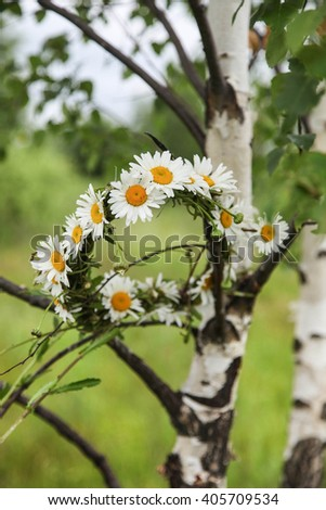 Wreath from camomiles on a birch - stock photo