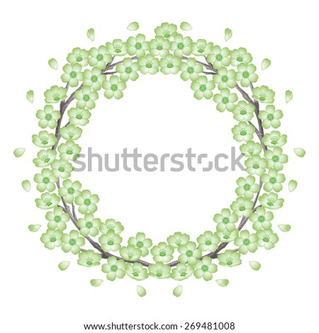 Wreath of cherry blossoms. Green. / Spring frame. The abstract shape. - stock photo