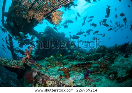 Wreck and fishes swim in Gili, Lombok, Nusa Tenggara Barat, Indonesia underwater photo. There are chubs fishes, damselfish indo-pacific sergeant Abudefduf vaigiensis - stock photo