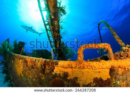 Wreck dive with reef shark swimming in background in nassau in bahamas - stock photo