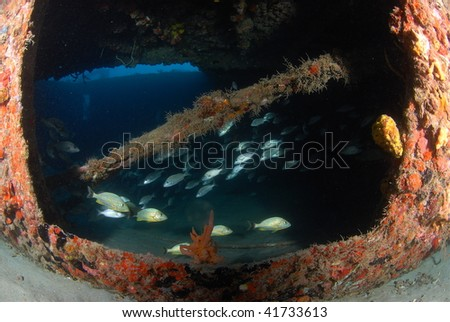 wreck diving and reef fish