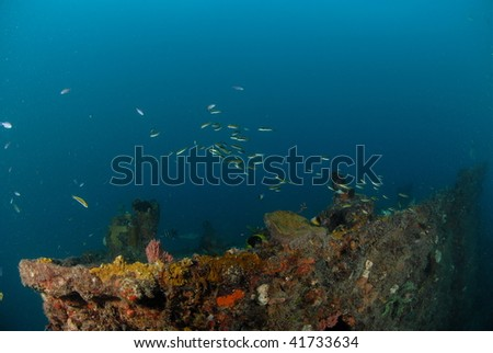 wreck diving and reef fish - stock photo