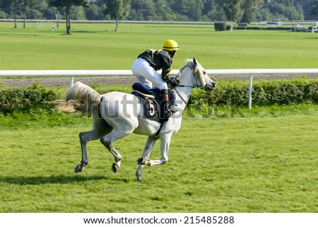 WROCLAW, POLAND - SEPTEMBER 6: Race for 3-year-old Arabian horse group II on 6 September 2014 in Wroclaw, Poland. In the photograph can be seen horses Cassini number 5 during the presentation.