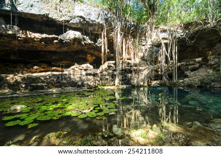 X-Batun Cenote - turquoise fresh water with water lilies and rocky wall with fantastic tree roots - stock photo