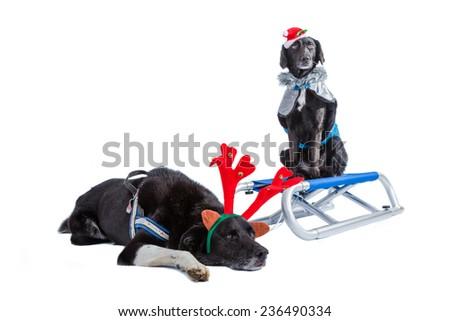 x-mas dogs - stock photo