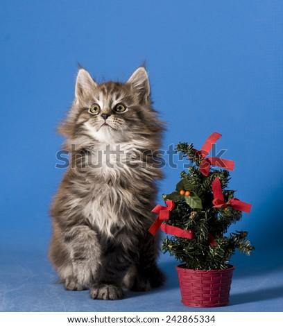 X-mas kitten - stock photo
