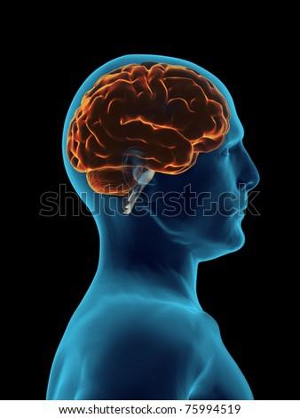 X Ray Brain - stock photo