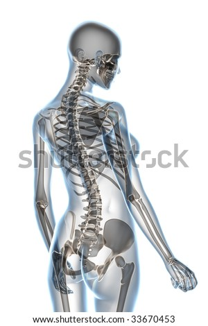 X-ray female anatomy over a white background - stock photo