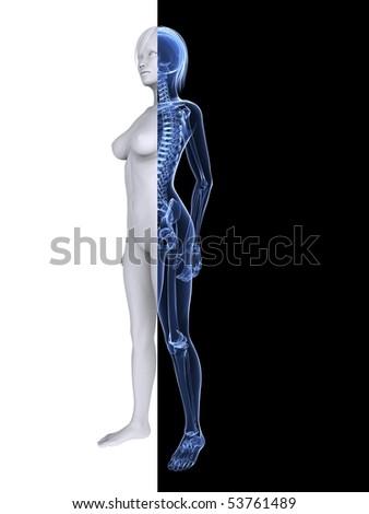 x--ray female skeleton - stock photo
