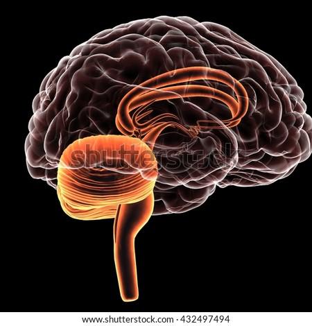 x-ray human brain.3D - stock photo