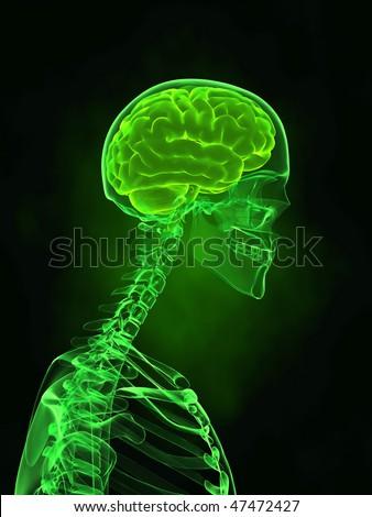 X-ray human skull with brain - stock photo