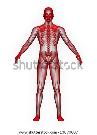x-ray of man red. front view on white background.