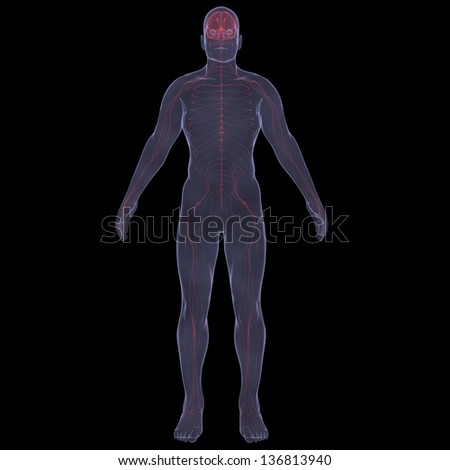 X-Ray picture of a person. Sore digestion. Isolated render on a black background