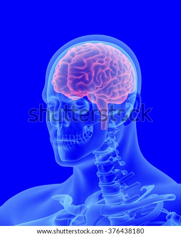 x-ray scan of human body with visible brain three-quarters view - stock photo