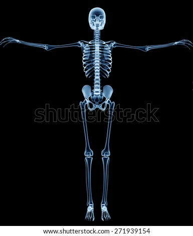 x-ray skeleton r�¶ntgen on black leonardo da vinci - stock photo