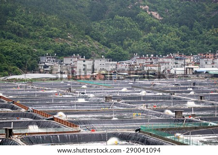 XIAPU, CHINA - JUNE 4, 2015: Man-made ponds filled with sea water houses millions of shrimps and prawns in a shrimp farm in Xiapu. Xiapu is a major player in the seafood farming industry in China. - stock photo