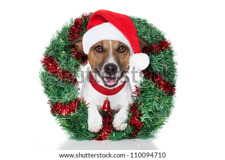 xmas dog - stock photo