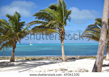 yacht and palm trees - stock photo
