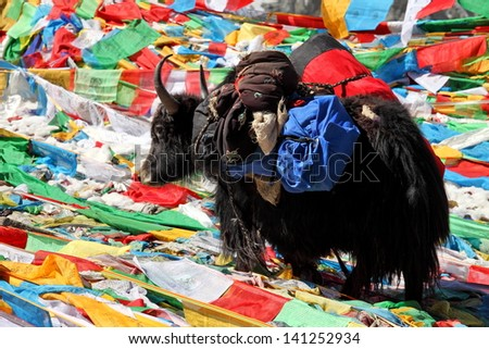 Yak in Tibet with Buddhist prayer flags background  - stock photo
