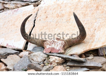 Yak skull decorated with Buddhist mantras in Tibet - stock photo
