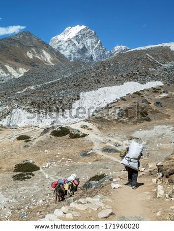 Yaks caravan on the trek at the foot of mount Everest (8848 m) near Dughla village - Nepal, Himalayas - stock photo