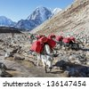 Yaks caravan on the trek at the foot of mount Everest (8848 m) near Lobuche village - Nepal, Himalayas - stock photo