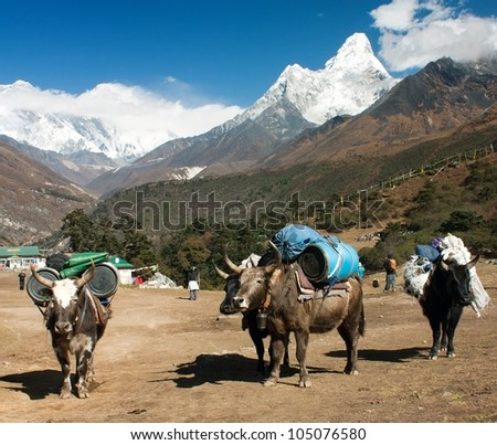 yaks with goods on the way to Everest base camp and Ama Dablam, Lhotse, Nuptse and top of Everest - stock photo