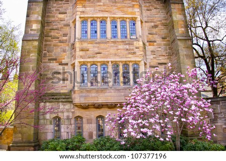 Yale University Victorian Building Windows Magnolia, Spring, New Haven Connecticut