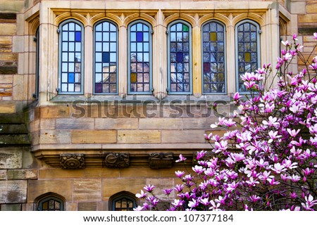 Yale University Victorian Windows Reflection, Magnolia, Spring, New Haven Connecticut - stock photo