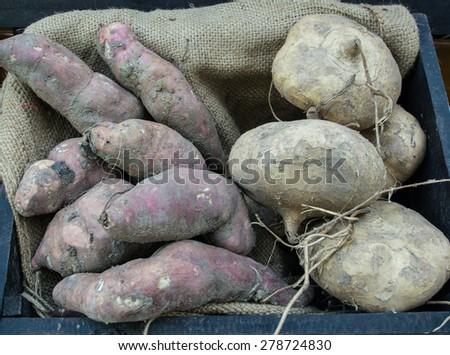 Yams and delicious jicama yam bean - stock photo