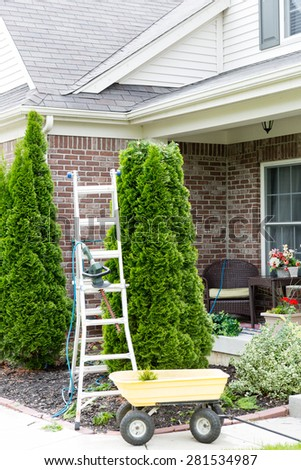 Yard work around the house with a stepladder standing alongside an Arborvitae or Thuja tree with a small yellow metal cart for removing the branches trimmed off to maintain its tapering shape