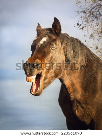 Yawning brown horse on sky background - stock photo