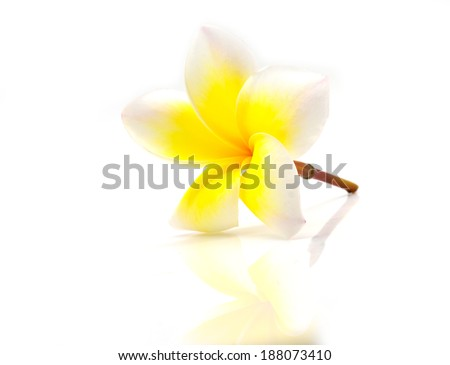 yeiiow orchid flower close-up isolated on white background