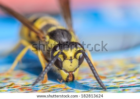 Yellojacket Wasp on a Blue and Multicolored Surface - stock photo