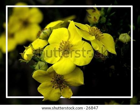 Yellow - stock photo
