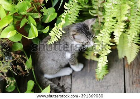 Cat Only Eats Shrimp