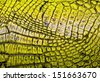 Yellow alligator patterned background - stock photo