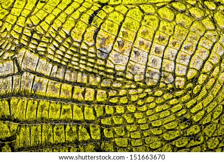 Yellow alligator patterned background - stock photo