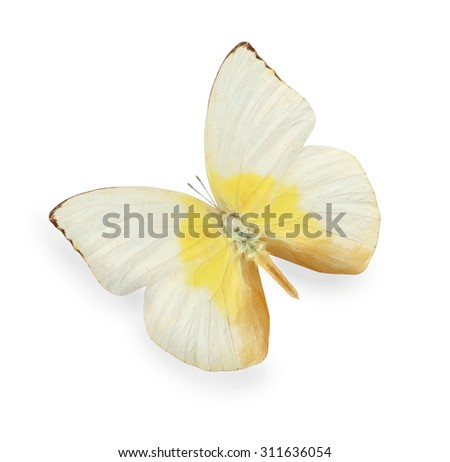 Yellow and beige butterfly isolated on white - stock photo