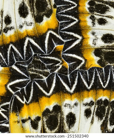 Yellow and Black Background made of Leopard Lacewing Butterfly's wing skin - stock photo